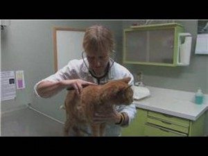 Cat Health: Signs of Liver Problems