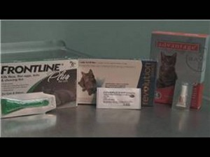 Treat Flee Allergies in Cats